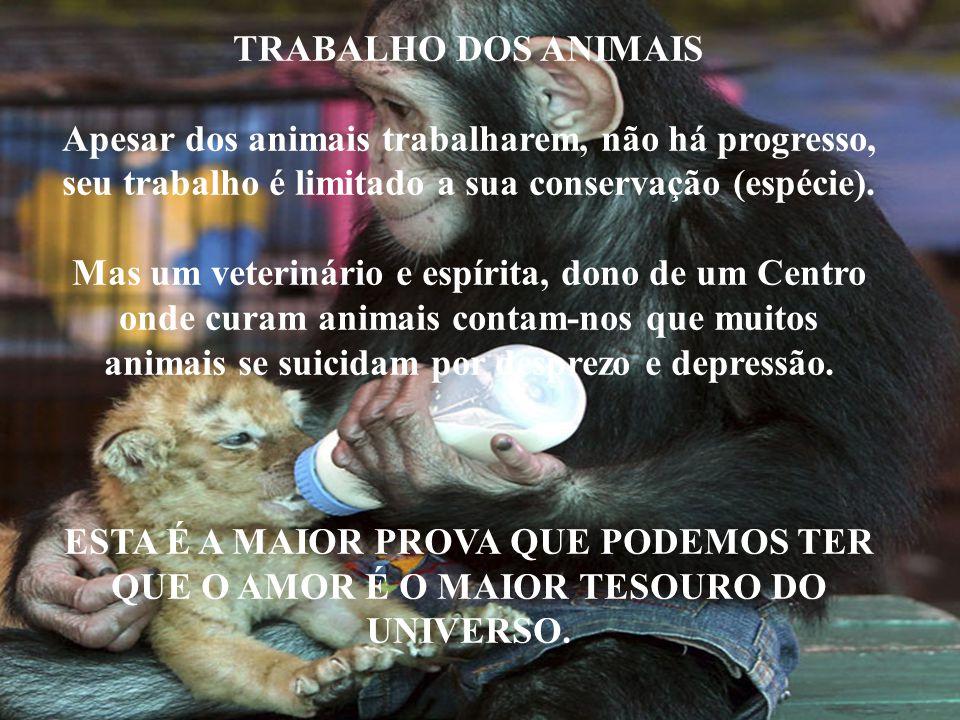 TRABALHO DOS ANIMAIS Apesar dos animais trabalharem, não há progresso, seu trabalho é limitado a sua conservação (espécie). Mas um veterinário e espír