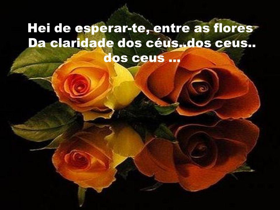 Hei de esperar-te, entre as flores Da claridade dos céus..dos ceus.. dos ceus...