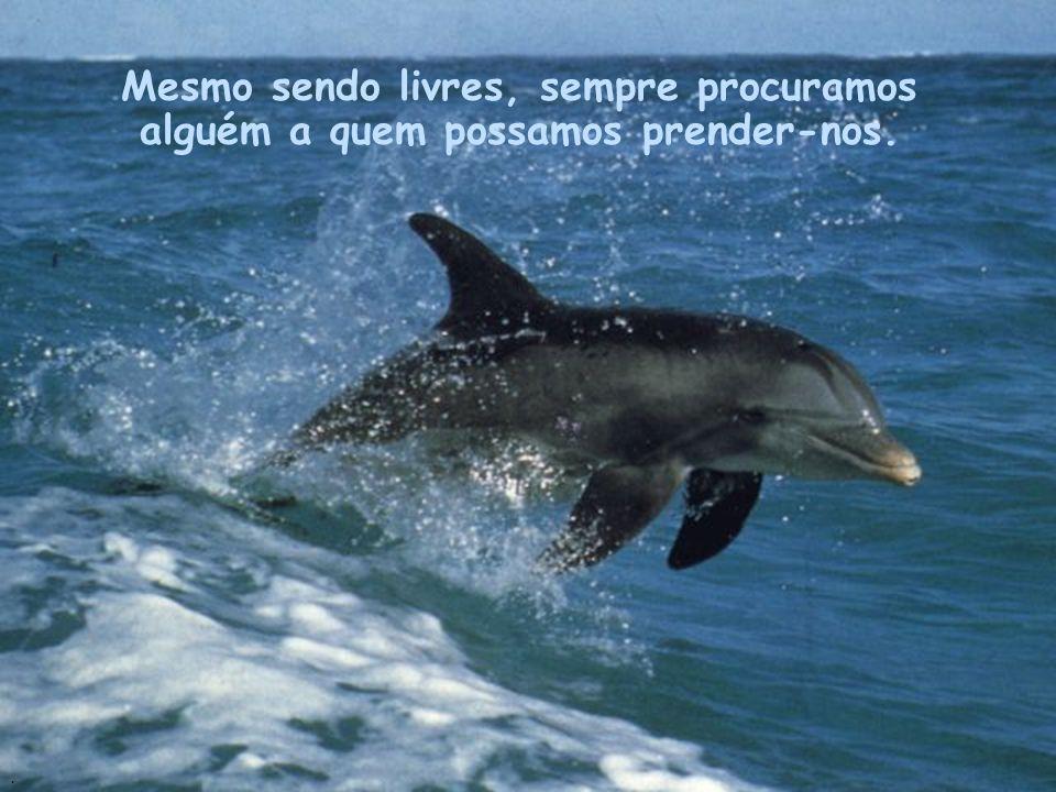 Como os Golfinhos, precisamos de liberdade para podermos viver. Precisamos de liberdade para expressarmos os nossos sentimentos..