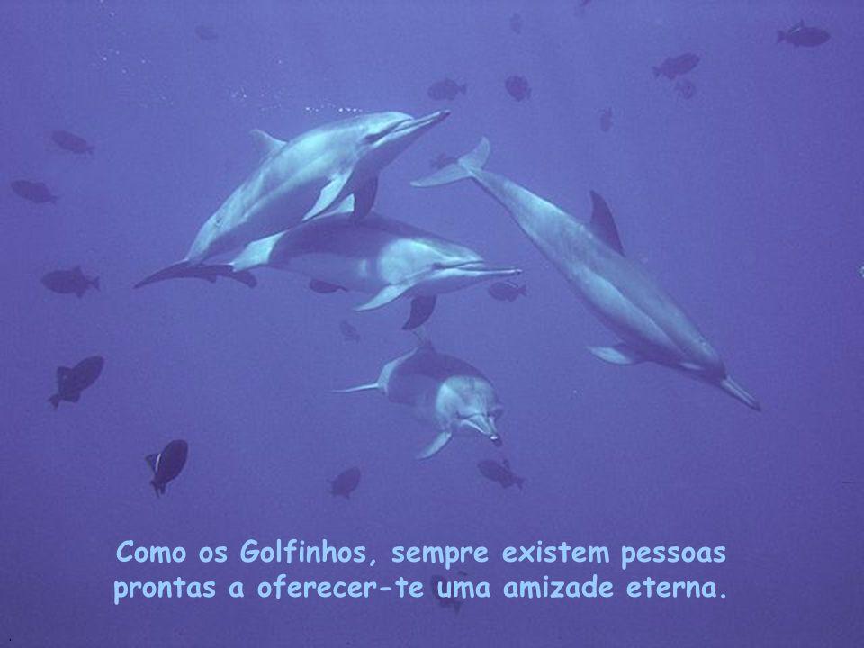 Não te sintas só à noite! Sempre existirá um amigo a quem possas chamar, assim como fazem os Golfinhos..