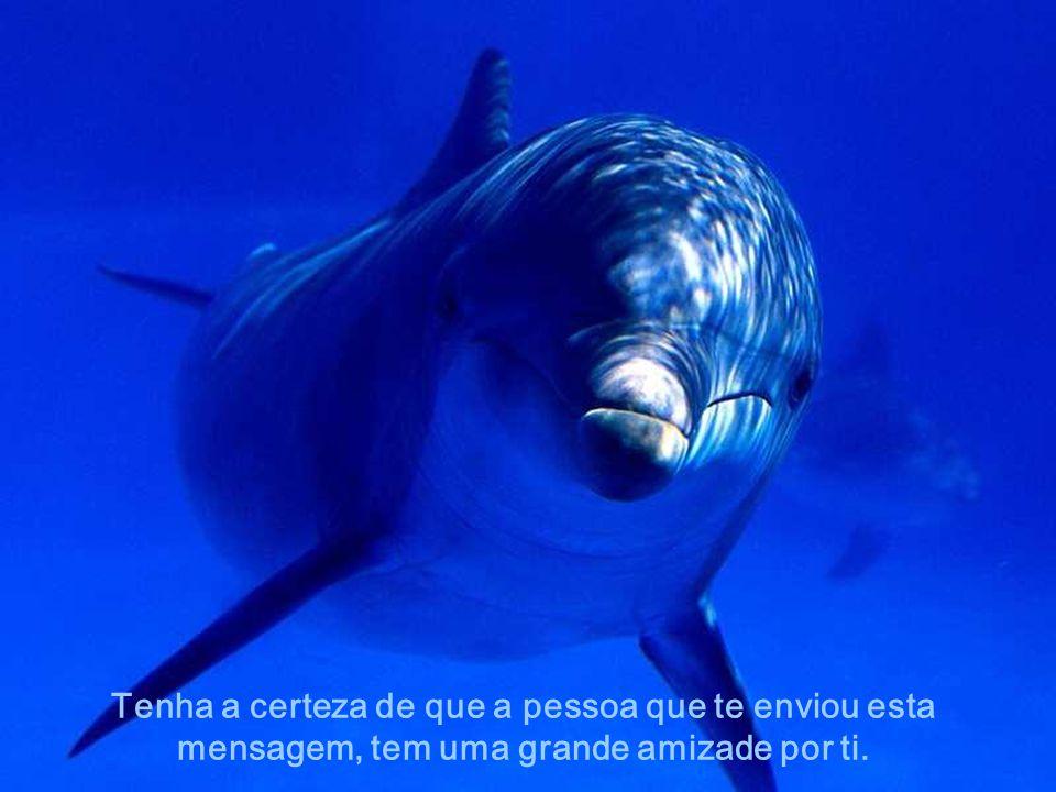 Como os Golfinhos, sempre existem pessoas prontas a oferecer-te uma amizade eterna..