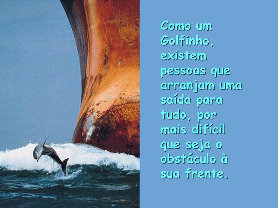 Como um Golfinho, existem pessoas que arranjam uma saída para tudo, por mais difícil que seja o obstáculo à sua frente..