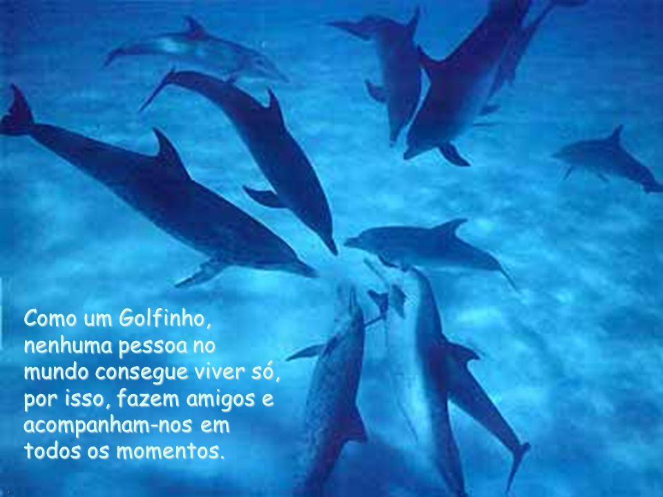 Como um Golfinho, nenhuma pessoa no mundo consegue viver só, por isso, fazem amigos e acompanham-nos em todos os momentos..