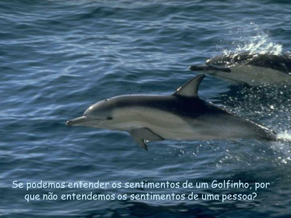 Como os Golfinhos, as pessoas precisam de carinho e compreensão..