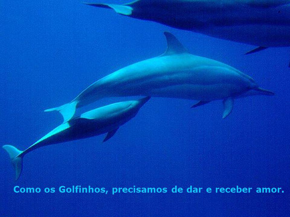 Como os Golfinhos, precisamos de dar e receber amor..