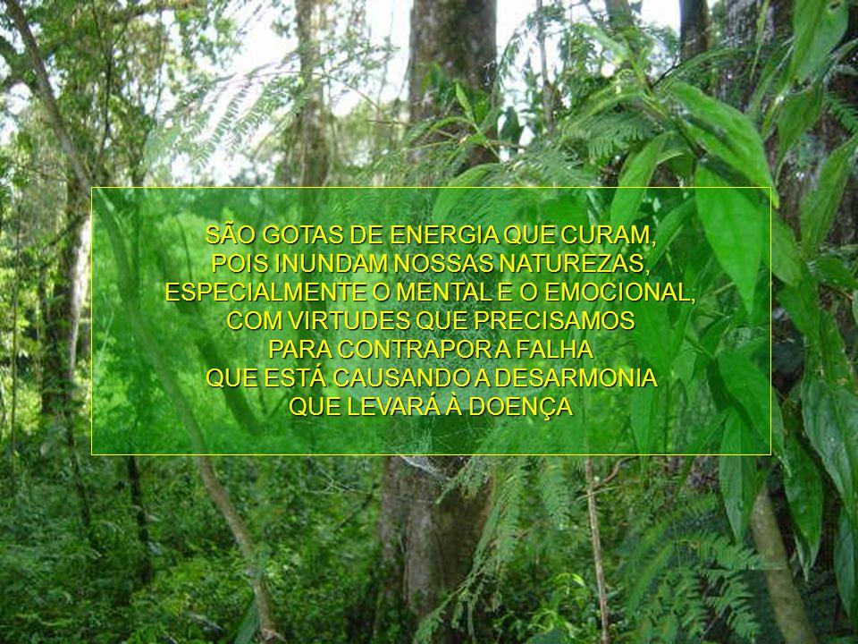 GOTAS DE ENERGIA QUE EQUILIBRAM E HARMONIZAM AS ESSÊNCIAS DESTE SISTEMA FLORAL VEM SENDO PESQUISADAS E UTILIZADAS HÁ 10 ANOS, AUXILIANDO NO RESGATE DA