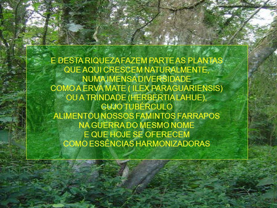 SERIA CONSIDERADO COMO O TERCEIRO VALE MAIS FÉRTIL DO MUNDO, SENDO SOBREPUJADO APENAS PELOS VALES DO RIO DANÚBIO, NA EUROPA, EM PRIMEIRO LUGAR E, EM S