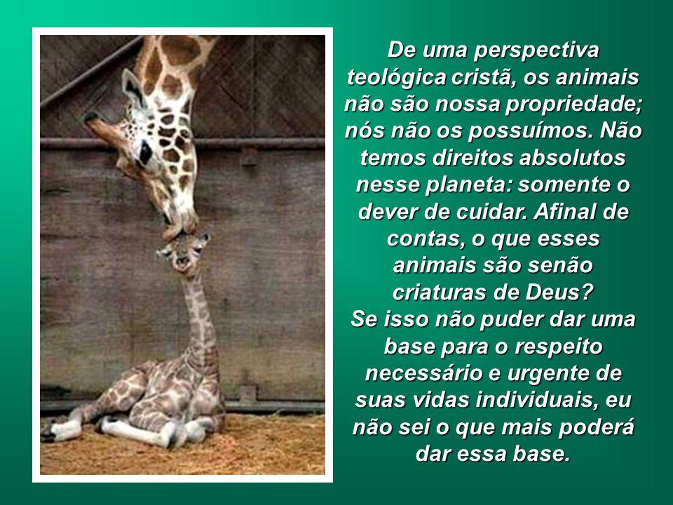 De uma perspectiva teológica cristã, os animais não são nossa propriedade; nós não os possuímos.