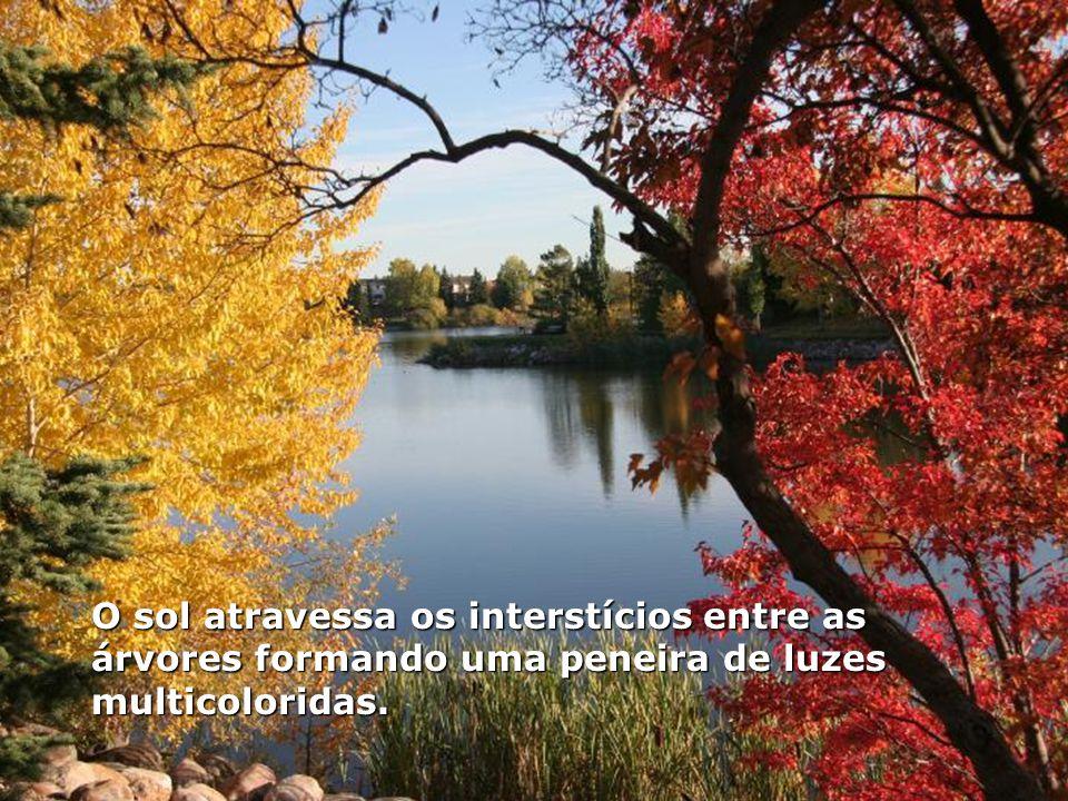 As primeiras folhas caem das árvores formando um tapete dourado sobre o chão e os dias de temperatura amena se tornam mais curtos.