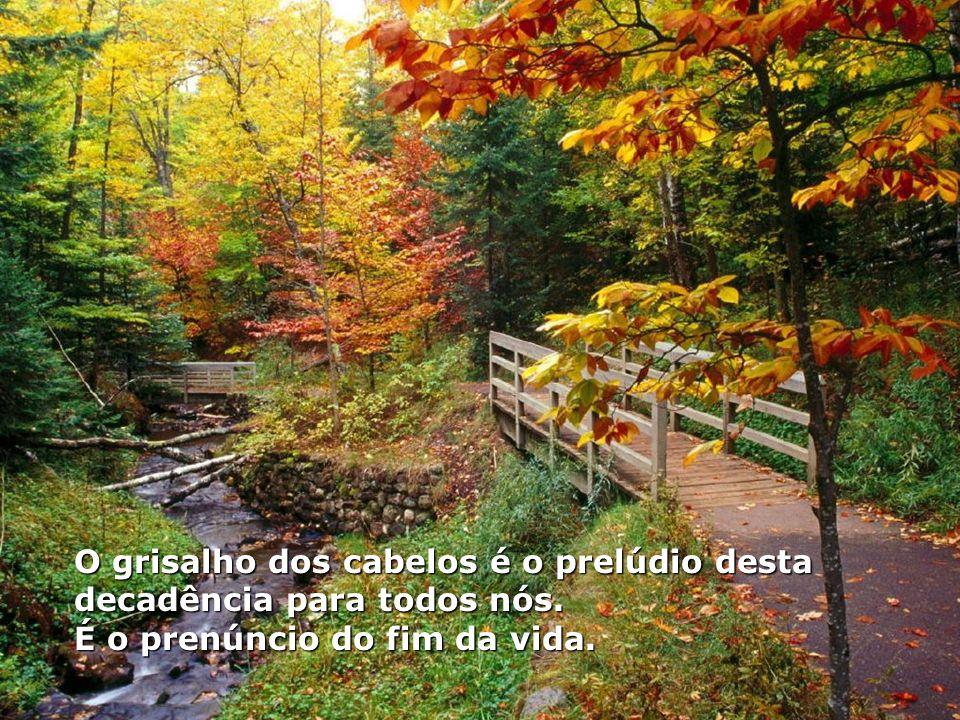 É o outono, paradoxo de vida e de morte... É por isso que se compara a idade de ouro a terceira idade do ser humano ao outono. Começa aí nossa decadên