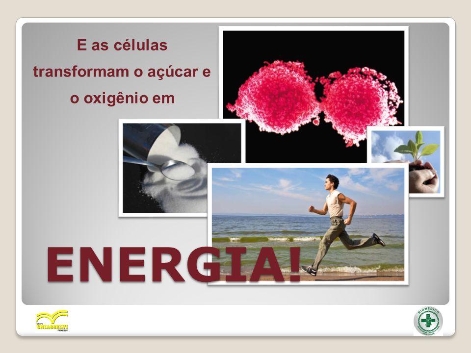 E as células transformam o açúcar e o oxigênio em ENERGIA!