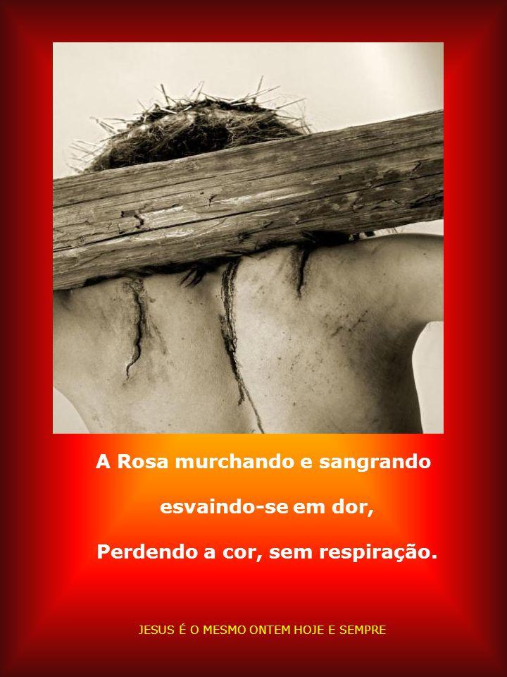 Sua vida foi Rosa Vermelha Cravada na cruz Quem passou por Ele sentiu compaixão. JESUS É O MESMO ONTEM HOJE E SEMPRE