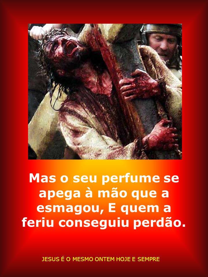 A Rosa murchando e sangrando esvaindo-se em dor, Perdendo a cor, sem respiração. JESUS É O MESMO ONTEM HOJE E SEMPRE