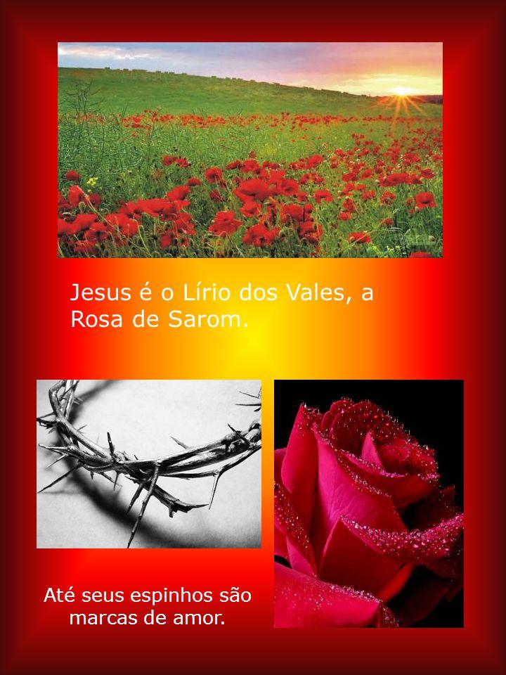 No terceiro dia o mundo encheu-se de flores e a rosa vermelha de novo brotou. JESUS É O MESMO ONTEM HOJE E SEMPRE
