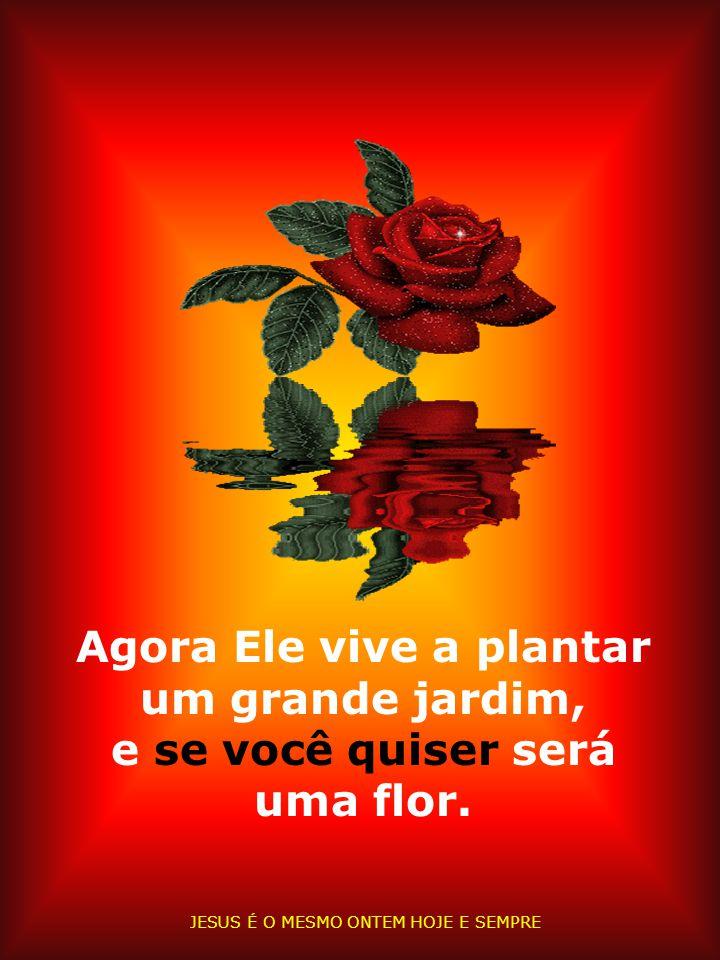 Jesus é o Lírio dos Vales, a Rosa de Sarom. Até seus espinhos são marcas de amor.