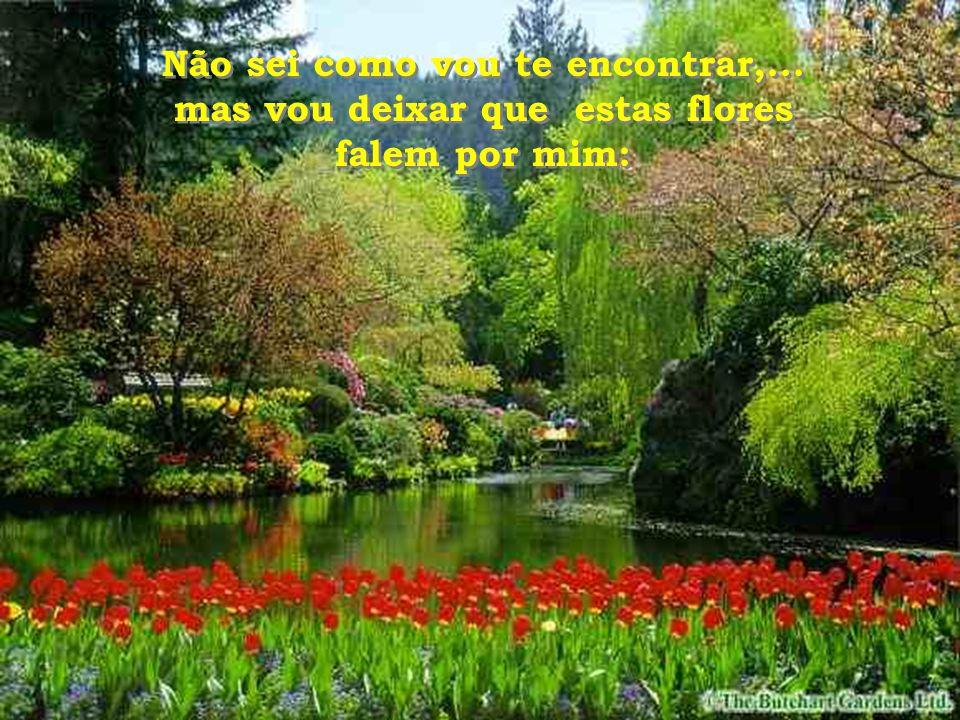 Nesse lugar onde estás agora… deixe que essas flores falem por mim...