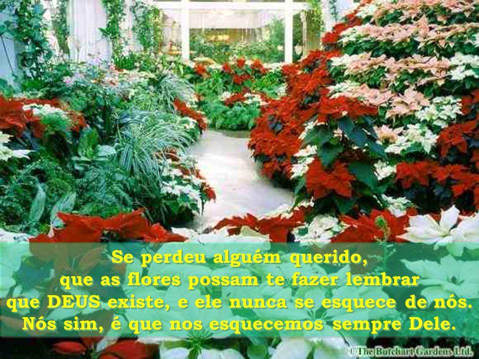 Se perdeu alguém querido, que as flores possam te fazer lembrar que DEUS existe, e ele nunca se esquece de nós.