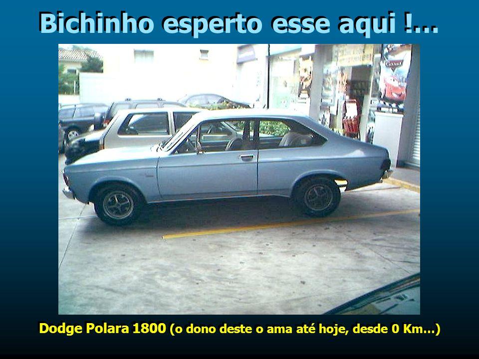 Bichinho esperto esse aqui !… Dodge Polara 1800 (o dono deste o ama até hoje, desde 0 Km…)