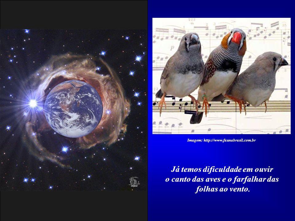 Existe uma só Verdade: os seres humanos, todas as formas de vida e a matéria componente do Universo são Vossa criação. Imagem:http://saintgermanchamav