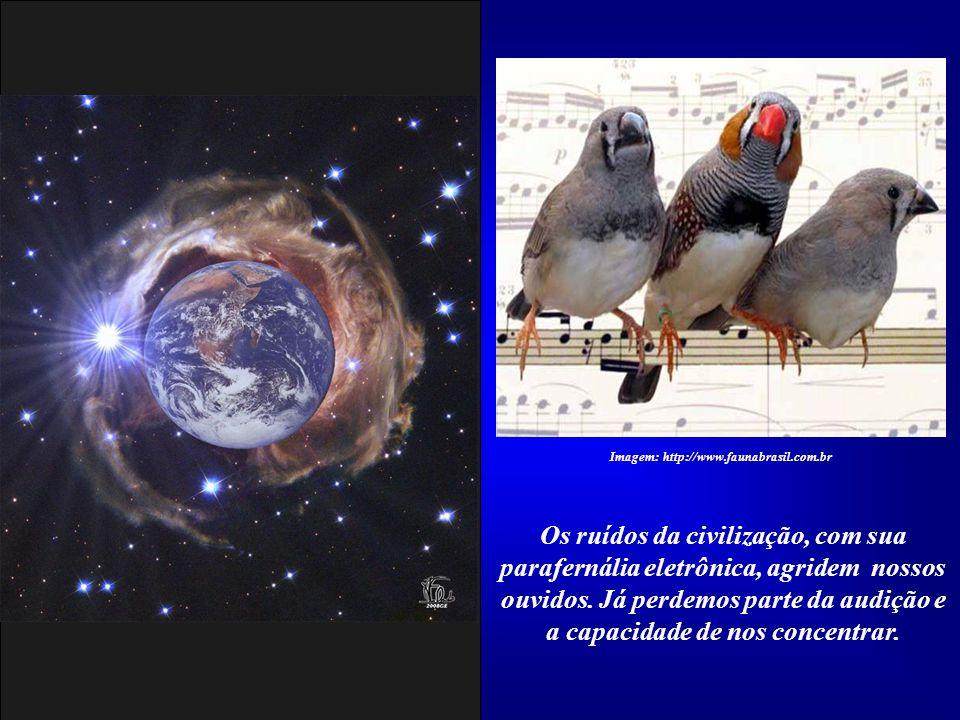 Já temos dificuldade em ouvir o canto das aves e o farfalhar das folhas ao vento. Imagem: http://www.faunabrasil.com.br