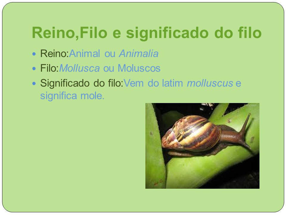 Reino,Filo e significado do filo Reino:Animal ou Animalia Filo:Mollusca ou Moluscos Significado do filo:Vem do latim molluscus e significa mole.