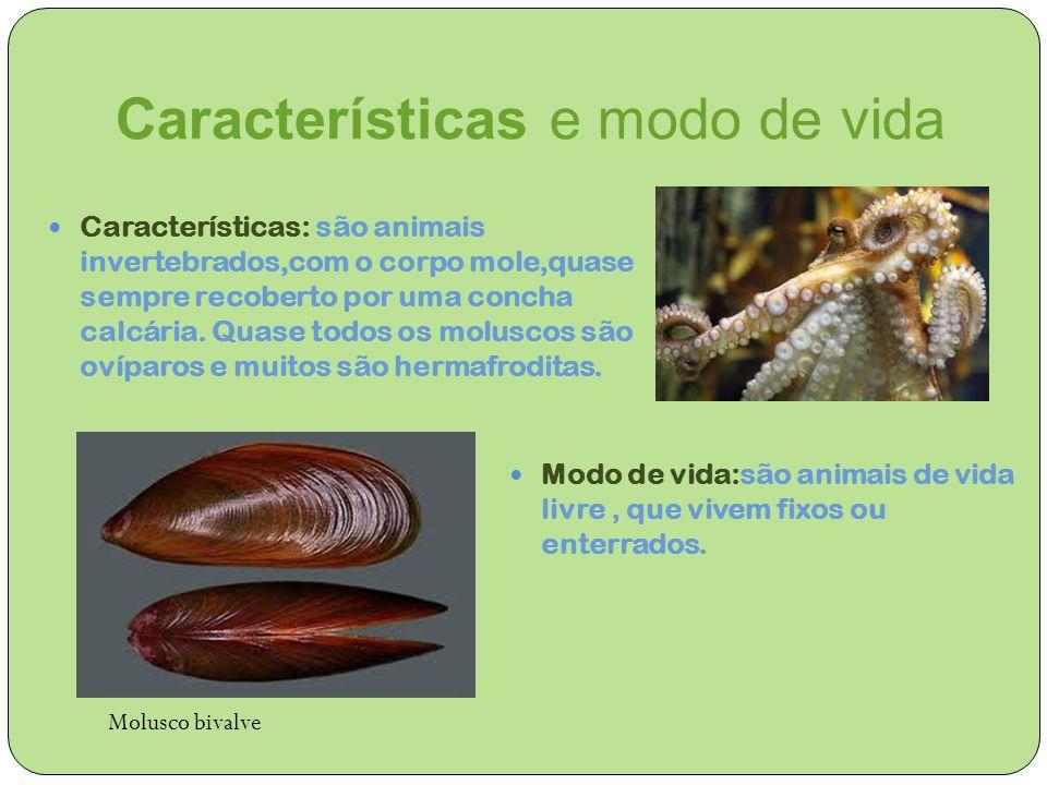Características e modo de vida Características: são animais invertebrados,com o corpo mole,quase sempre recoberto por uma concha calcária. Quase todos