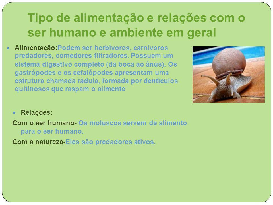 Tipo de alimentação e relações com o ser humano e ambiente em geral Alimentação:Podem ser herbívoros, carnívoros predadores, comedores filtradores. Po