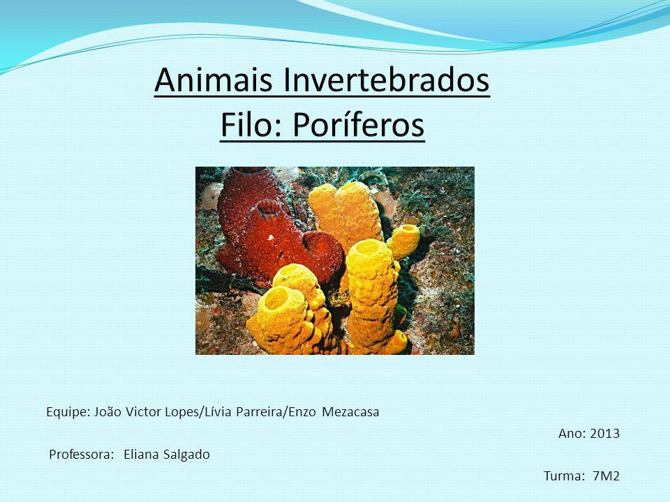 Características Reino: Animália Filo: Porifera Significado: O filo Porífero recebeu esse nome por causa dos seus poros.