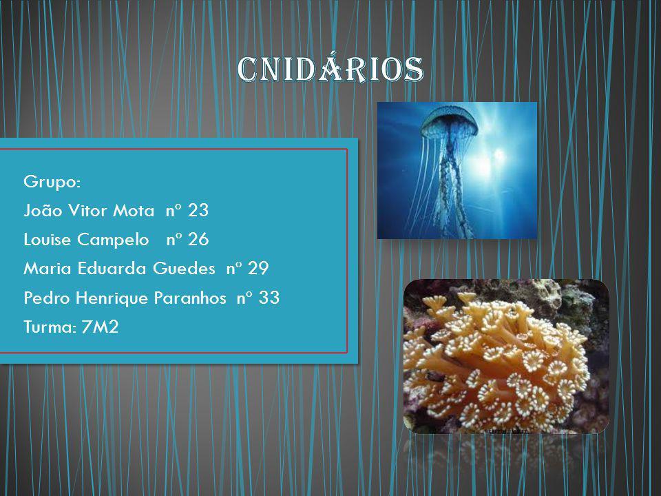 Grupo: João Vitor Mota nº 23 Louise Campelo nº 26 Maria Eduarda Guedes nº 29 Pedro Henrique Paranhos nº 33 Turma: 7M2