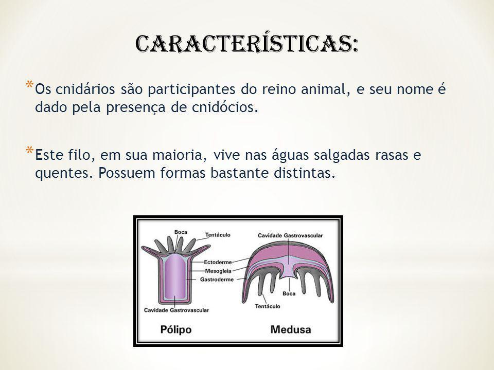 * Os cnidários são participantes do reino animal, e seu nome é dado pela presença de cnidócios. * Este filo, em sua maioria, vive nas águas salgadas r