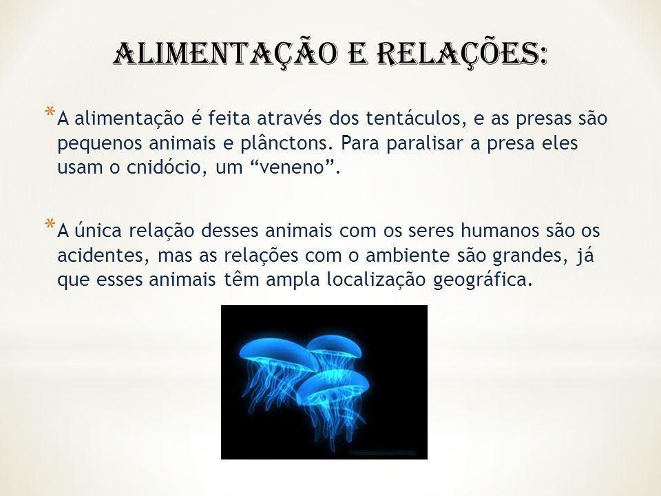 * A alimentação é feita através dos tentáculos, e as presas são pequenos animais e plânctons. Para paralisar a presa eles usam o cnidócio, um veneno.