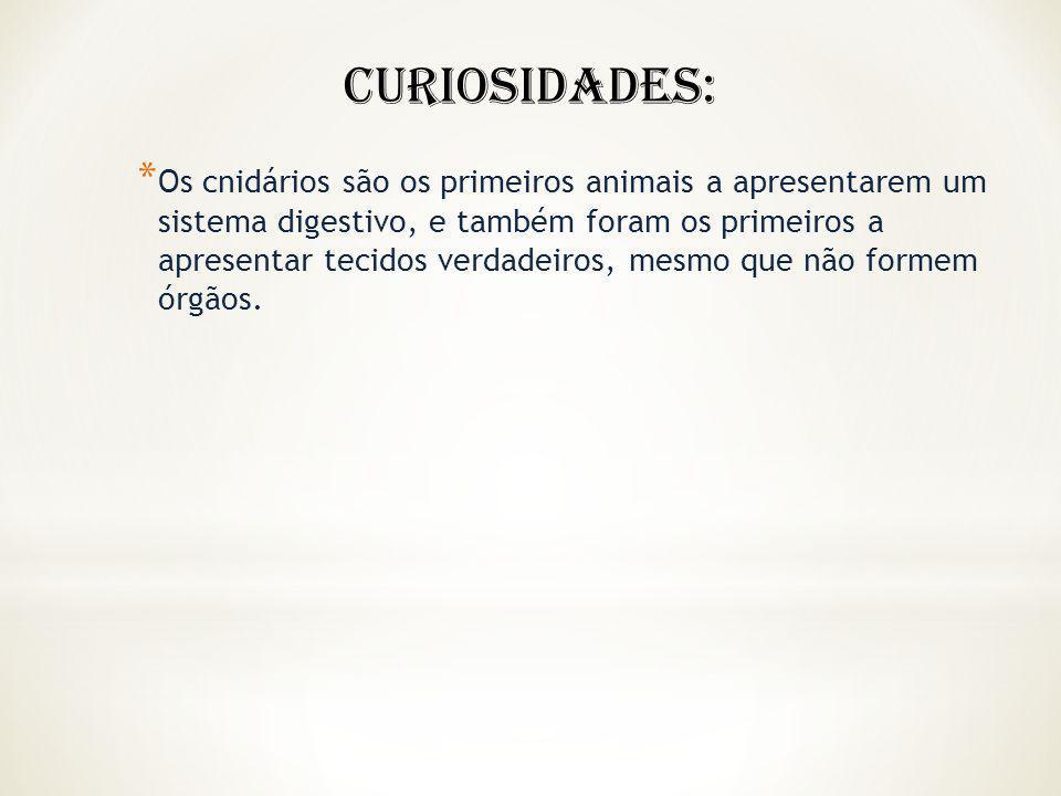 * Os cnidários são os primeiros animais a apresentarem um sistema digestivo, e também foram os primeiros a apresentar tecidos verdadeiros, mesmo que n