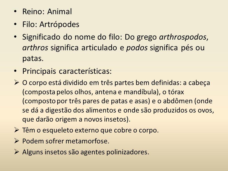 Reino: Animal Filo: Artrópodes Significado do nome do filo: Do grego arthrospodos, arthros significa articulado e podos significa pés ou patas. Princi