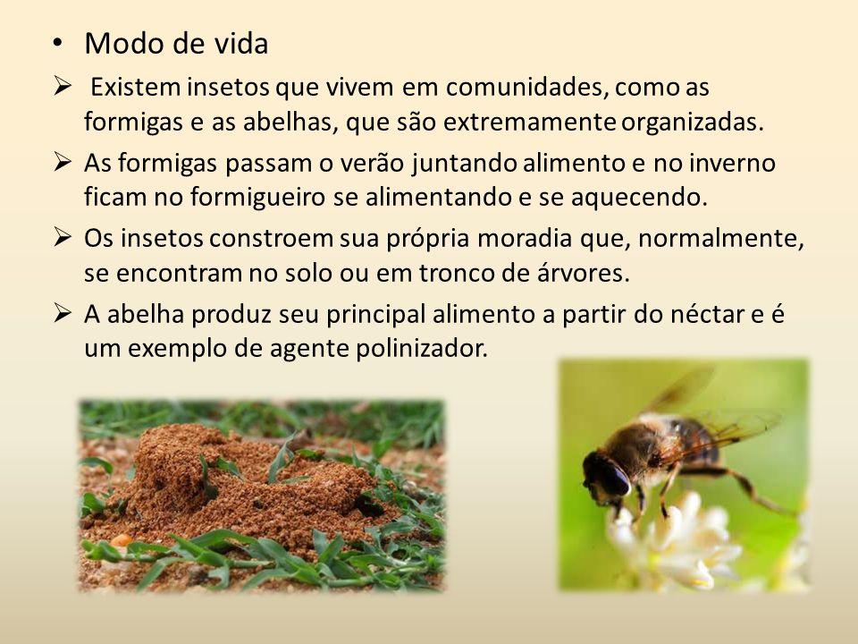 Modo de vida Existem insetos que vivem em comunidades, como as formigas e as abelhas, que são extremamente organizadas. As formigas passam o verão jun