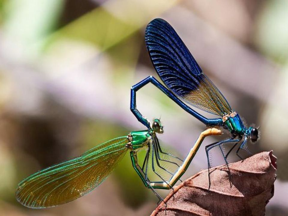 Reprodução dos insetos: Os insetos têm sexos separados, sua reprodução é sexuada e a fecundação é interna.