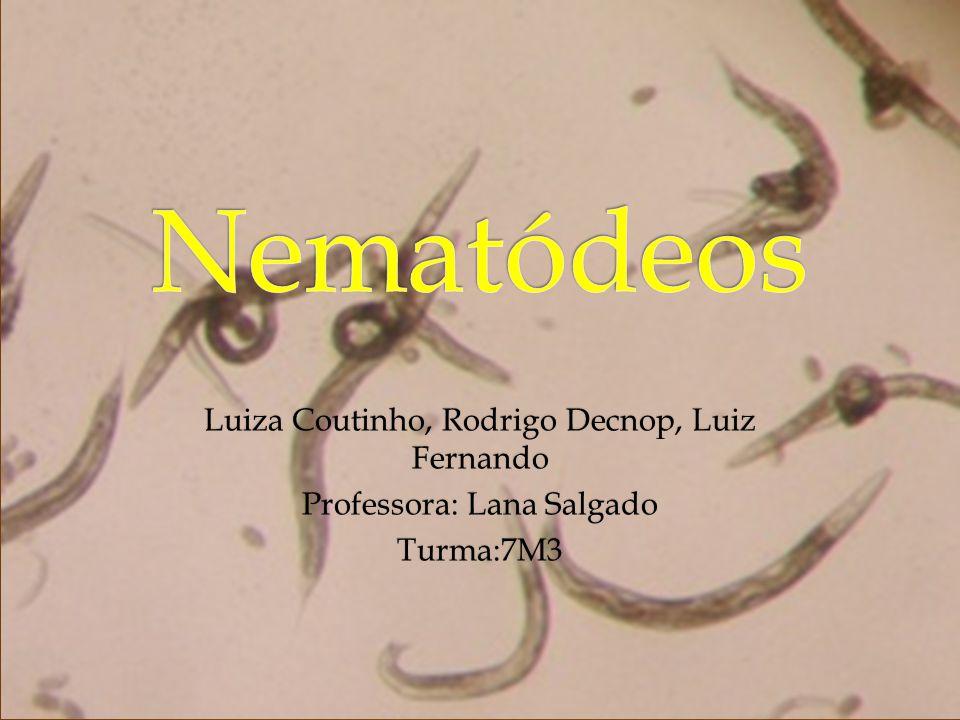 REINO : ANIMAL FILO : Nematódea SIGNIFICADO DO FILO : Vem do grego nematos, filamento e eidos, semelhantes.