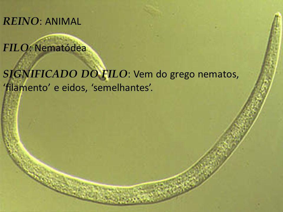 CARACTERISTICAS PRINCIPAIS : São animais cilíndricos, alongados e afilados nas extremidades.