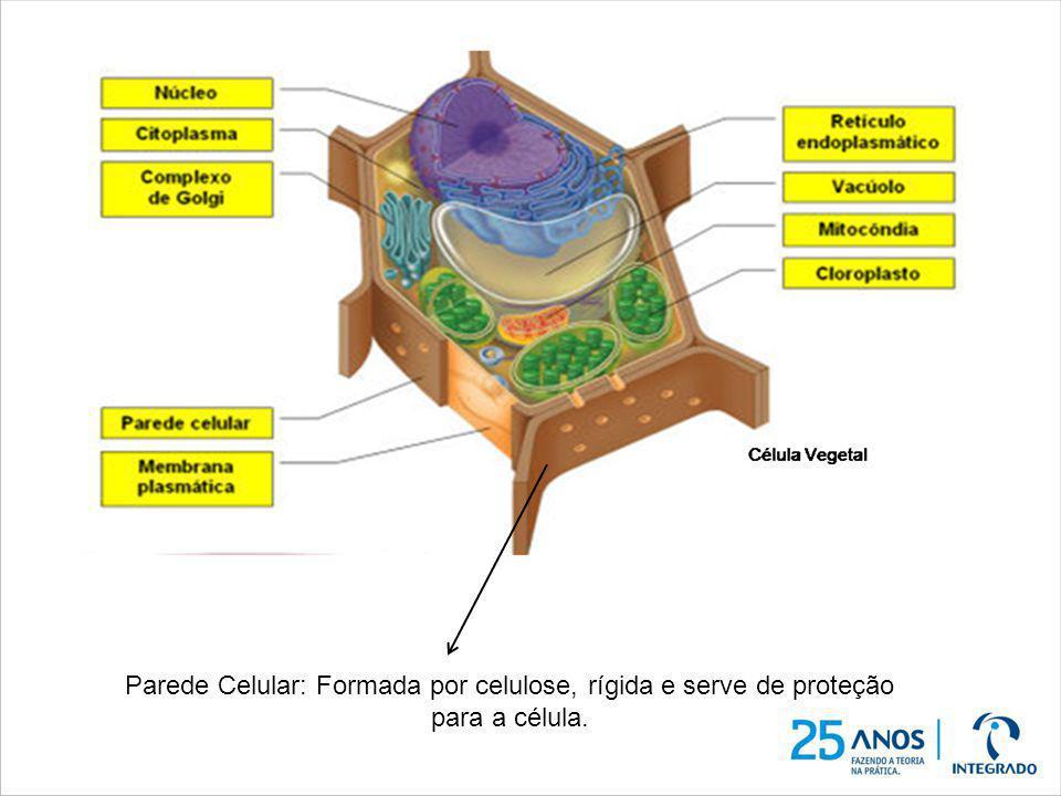 Estruturas constituem somente a célula VEGETAL Parede Celular: Formada por celulose, rígida e serve de proteção para a célula.