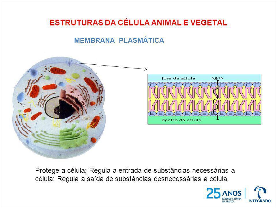 ESTRUTURAS DA CÉLULA ANIMAL E VEGETAL Protege a célula; Regula a entrada de substâncias necessárias a célula; Regula a saída de substâncias desnecessá