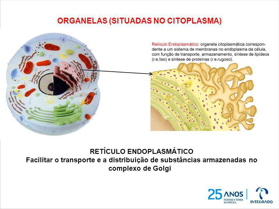 ORGANELAS (SITUADAS NO CITOPLASMA) RETÍCULO ENDOPLASMÁTICO Facilitar o transporte e a distribuição de substâncias armazenadas no complexo de Golgi