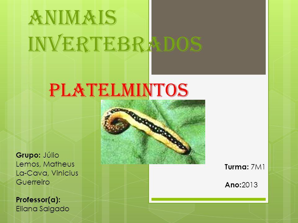 Animais invertebrados Platelmintos Grupo: Júlio Lemos, Matheus La-Cava, Vinicius Guerreiro Professor(a): Eliana Salgado Turma: 7M1 Ano: 2013