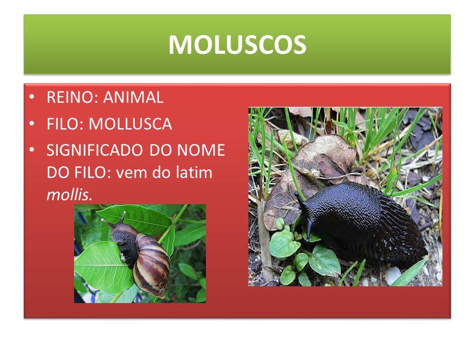 MOLUSCOS CARACTERÍSTICAS PRINCIPAIS: Tais animais têm um corpo mole, um pé muscular e um manto que protege uma parte do corpo e que muitas vezes possui uma concha.