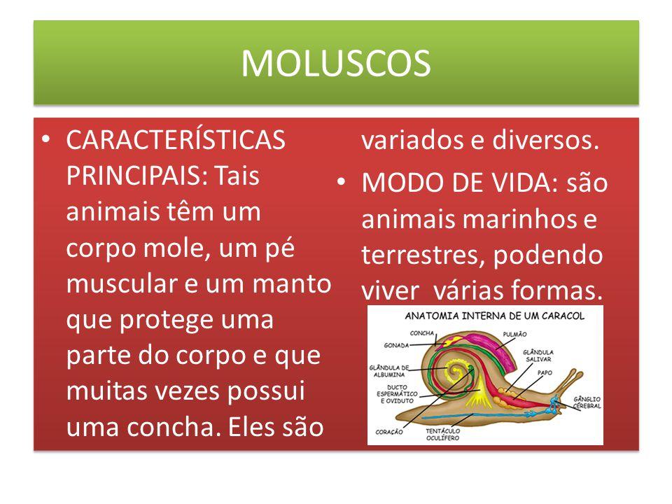 MOLUSCOS ALIMENTAÇÃO: um grupo muito diversificado no que se refere a nutrição.