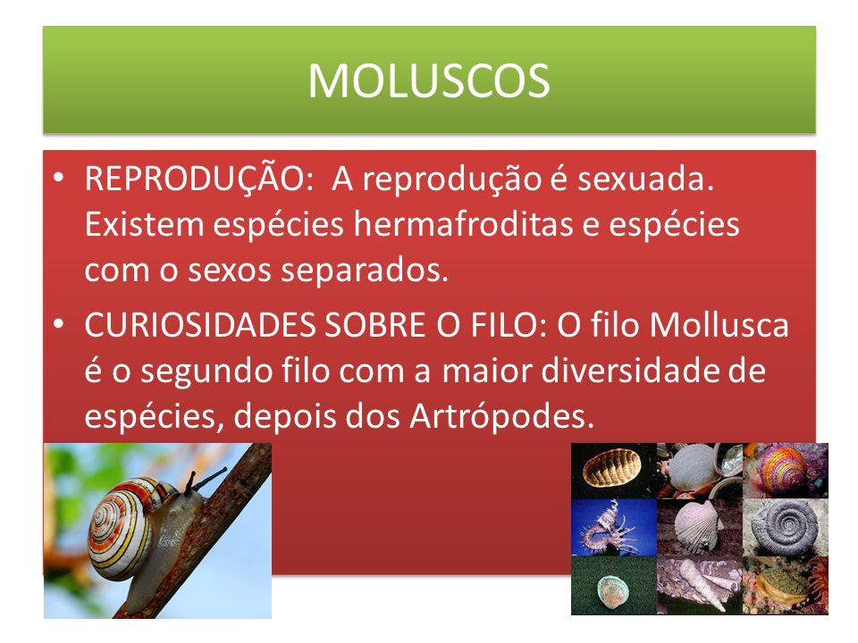 BIBLIOGRAFIAS http://websmed.portoalegre.rs.gov.br/escolas/obino/revista/c11_matelmintos/moluscos.html http://www.brasilescola.com/biologia/moluscos2.htm http://www.google.com.br/imgres?q=moluscos&hl=pt- BR&sa=X&noj=1&tbm=isch&prmd=imvns&tbnid=8PAkspqKuhn10M:&imgrefurl=http://www.achetudoeregiao.com.br/animais/Molusco/moluscos.ht m&imgurl=http://www.achetudoeregiao.com.br/animais/Molusco/moluscos1.jpg&w=450 http://www.google.com.br/imgres?q=moluscos&hl=pt- BR&sa=X&noj=1&tbm=isch&prmd=imvns&tbnid=8PAkspqKuhn10M:&imgrefurl=http://www.achetudoeregiao.com.br/animais/Molusco/moluscos.ht m&imgurl=http://www.achetudoeregiao.com.br/animais/Molusco/moluscos1.jpg&w=450 http://www.octopus.furg.br/drpolvomar/_disc6/00000374.htm http://pt.wikipedia.org/wiki/Moluscos#Import.C3.A2ncia http://naturezadosbichos.blogspot.com/2011/10/moluscos.html http://www.coladaweb.com/files/molusco.jpg http://www.forodefotos.com/attachments/fotos-de-animales-acuaticos/15327d1292301491-fotos-de-moluscos-marinos-fotos-de-moluscos- marinos-estrella.jpg http://www.forodefotos.com/attachments/fotos-de-animales-acuaticos/15327d1292301491-fotos-de-moluscos-marinos-fotos-de-moluscos- marinos-estrella.jpg http://eduinvertebrados.wikispaces.com/file/view/Moluscos1.jpg/155563963/Moluscos1.jpg http://www.google.com.br/imgres?um=1&hl=pt-BR&biw=1360&bih=673&tbm=isch&tbnid=3Fyy8qy7- MU70M:&imgrefurl=http://viagemvilavelha.blogspot.com/&imgurl=http://2.bp.blogspot.com/_2kDbC8J5UM4/SePPFfhfenI/AAAAAAAAAE8/k254htb ZPSo/s400/Imagem%252B236.jpg&w=400&h=300&ei=31Y_UOOOMMri0QGjtIG4DQ&zoom=1 http://www.google.com.br/imgres?um=1&hl=pt-BR&biw=1360&bih=673&tbm=isch&tbnid=3Fyy8qy7- MU70M:&imgrefurl=http://viagemvilavelha.blogspot.com/&imgurl=http://2.bp.blogspot.com/_2kDbC8J5UM4/SePPFfhfenI/AAAAAAAAAE8/k254htb ZPSo/s400/Imagem%252B236.jpg&w=400&h=300&ei=31Y_UOOOMMri0QGjtIG4DQ&zoom=1 http://websmed.portoalegre.rs.gov.br/escolas/obino/revista/c11_matelmintos/moluscos.html http://www.brasilescola.com/biologia/moluscos2.htm htt