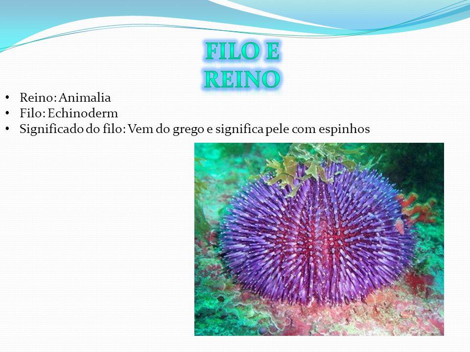 Reino: Animalia Filo: Echinoderm Significado do filo: Vem do grego e significa pele com espinhos