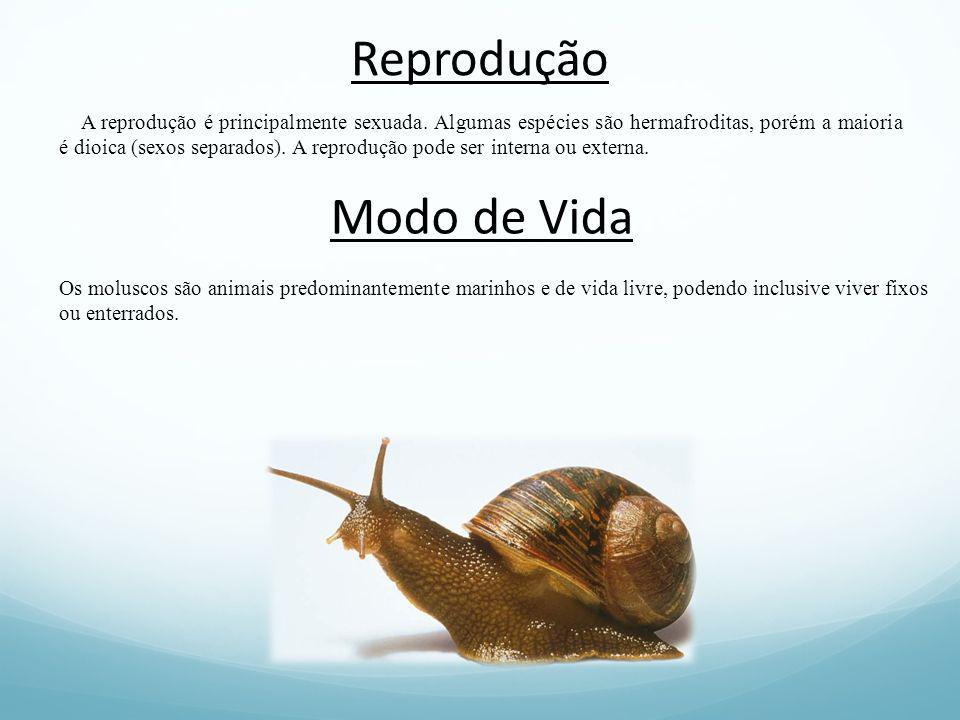 Reprodução A reprodução é principalmente sexuada. Algumas espécies são hermafroditas, porém a maioria é dioica (sexos separados). A reprodução pode se