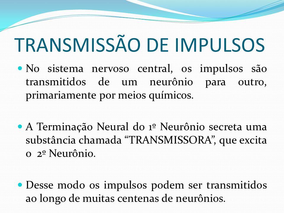 TRANSMISSÃO DE IMPULSOS No sistema nervoso central, os impulsos são transmitidos de um neurônio para outro, primariamente por meios químicos. A Termin