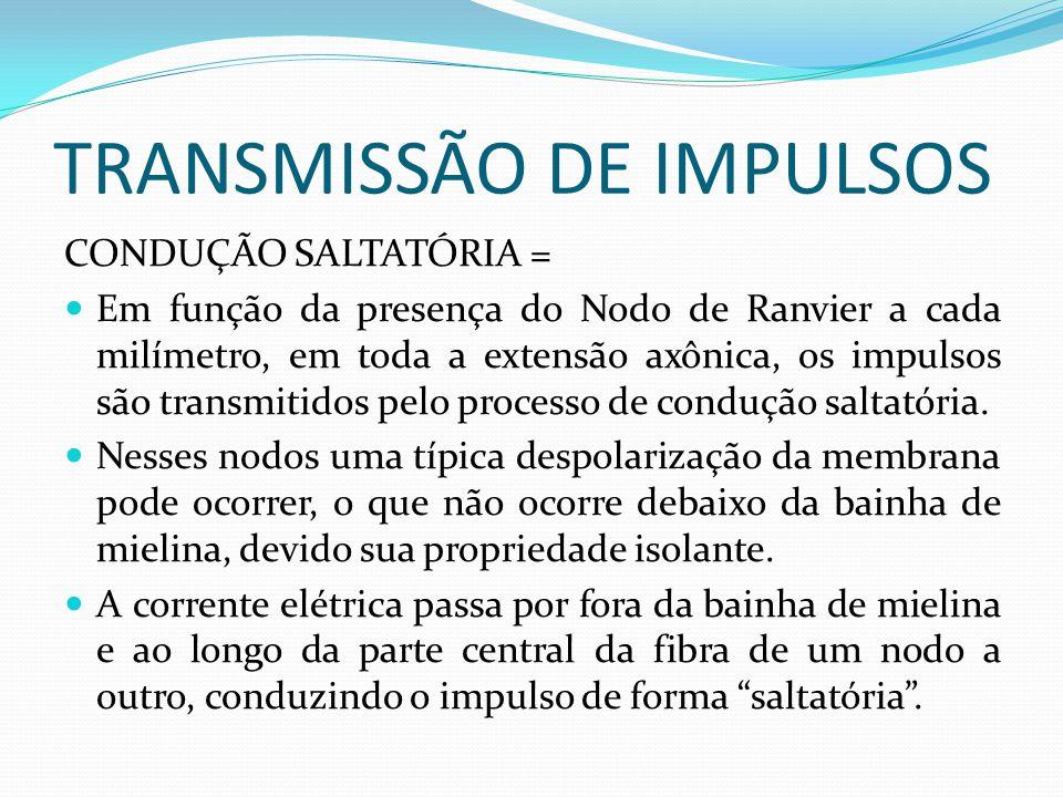 TRANSMISSÃO DE IMPULSOS CONDUÇÃO SALTATÓRIA = Em função da presença do Nodo de Ranvier a cada milímetro, em toda a extensão axônica, os impulsos são t