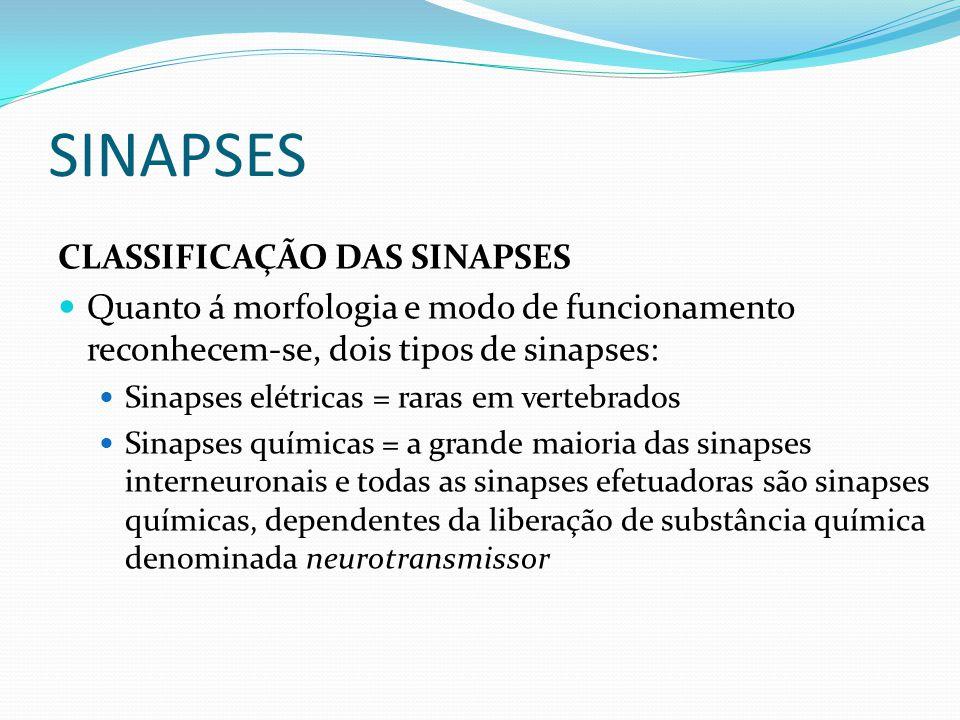 SINAPSES CLASSIFICAÇÃO DAS SINAPSES Quanto á morfologia e modo de funcionamento reconhecem-se, dois tipos de sinapses: Sinapses elétricas = raras em v
