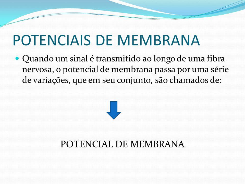 POTENCIAIS DE MEMBRANA Antes do início do potencial de ação, o potencial de membrana em repouso é muito negativo no interior celular, mas logo que começa o potencial de ação, o potencial de membrana torna-se positivo, seguido rapidamente, ao retorno do valor negativo inicial.